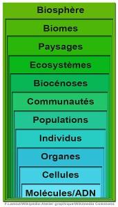 342px-NiveauOrganisationIntégrationBiodiversité